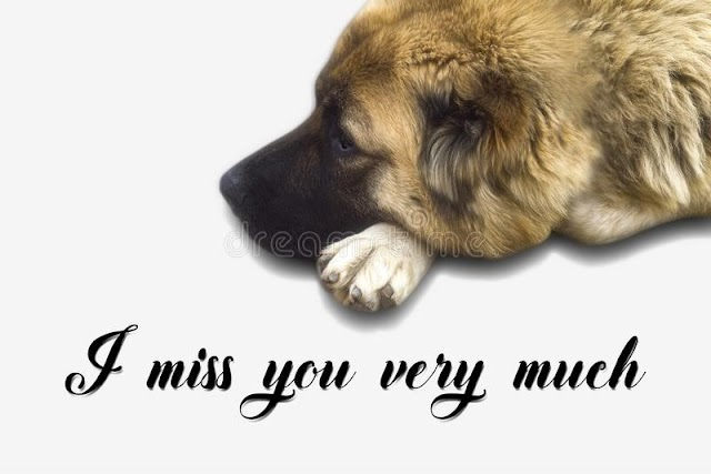Top 120+ I Miss You Images, Pictures, Wallpaper for WhatsApp