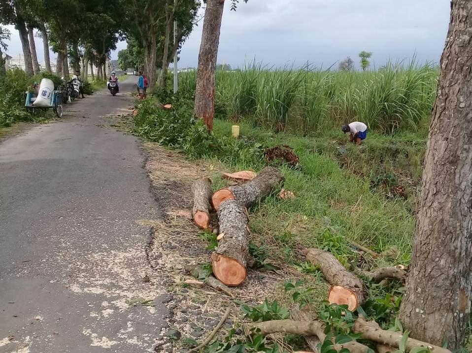 Puluhan Pohon Pelindung Ditebang Secara Liar