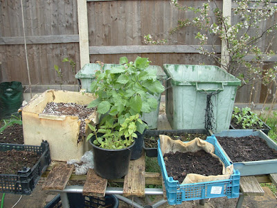 Photo of an old wooden table covered in various seed trays and plastic tubs and pots of plants
