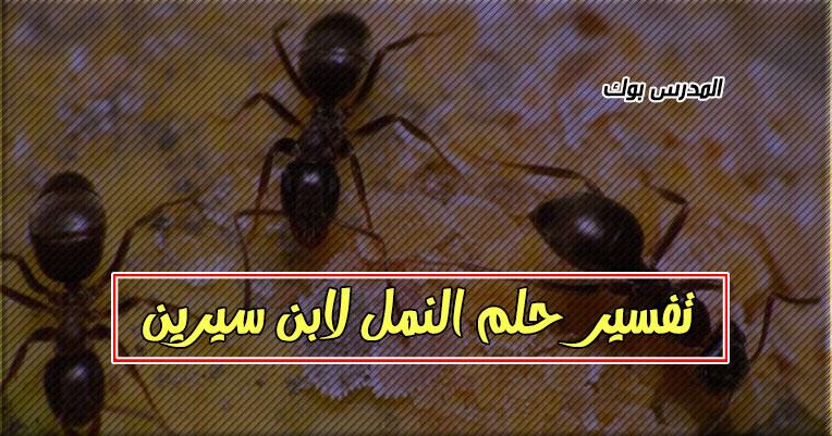 تفسير النمل في المنام لكبار علماء تفسير الأحلام ابن سيرين والنابلسي