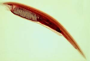 Environmental Science: Amphioxus