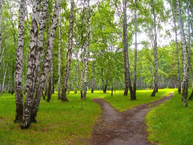 Колдовскими травами  устланы все дорожки лесные