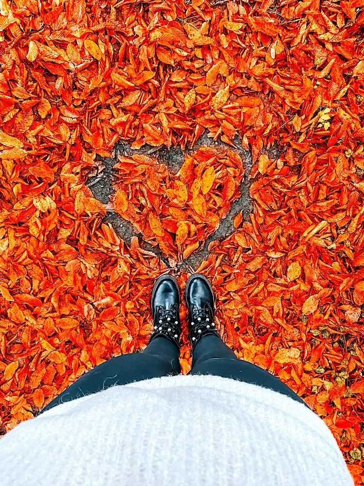 Herbstfarben Naturfarben bunte Blätter