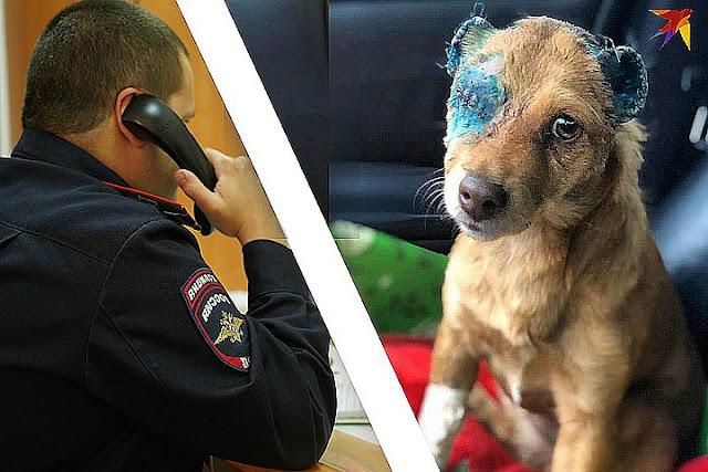 «Отрезали хвост и уши»: на Северном Кавказе полицейские разыскивают живодера, замучившего двух бездомных собак