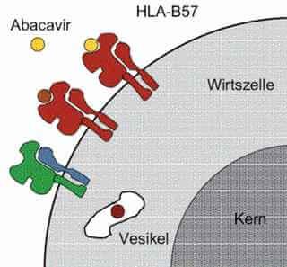 abacavir HLA-B 5701 testi