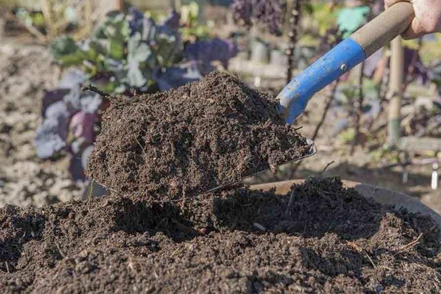 rawatlah tanaman jahe dengan memberikan pupuk kompos