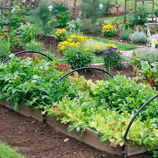 Vegetable Garden Design Ideas: New Home Interior Design: Grow A Vegetable Garden In