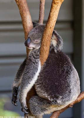 Lustige Müde Bilder im Zoo schlafende Tiere
