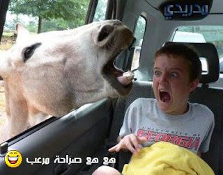 صور مضحكة , اجمل صور مضحكه , لقطات طريفة مضحكة