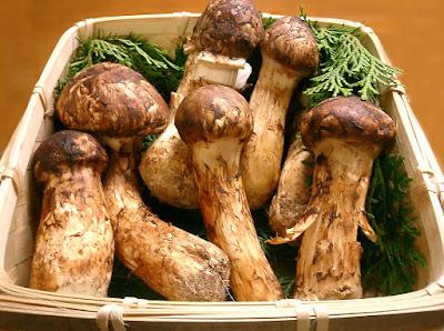 Matsutake mushrooms