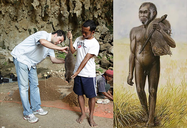 Changes in rat size reveal habitat of 'Hobbit' hominin