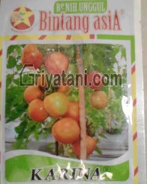 Benih Tomat Karina 10gram cap Bintang Asia