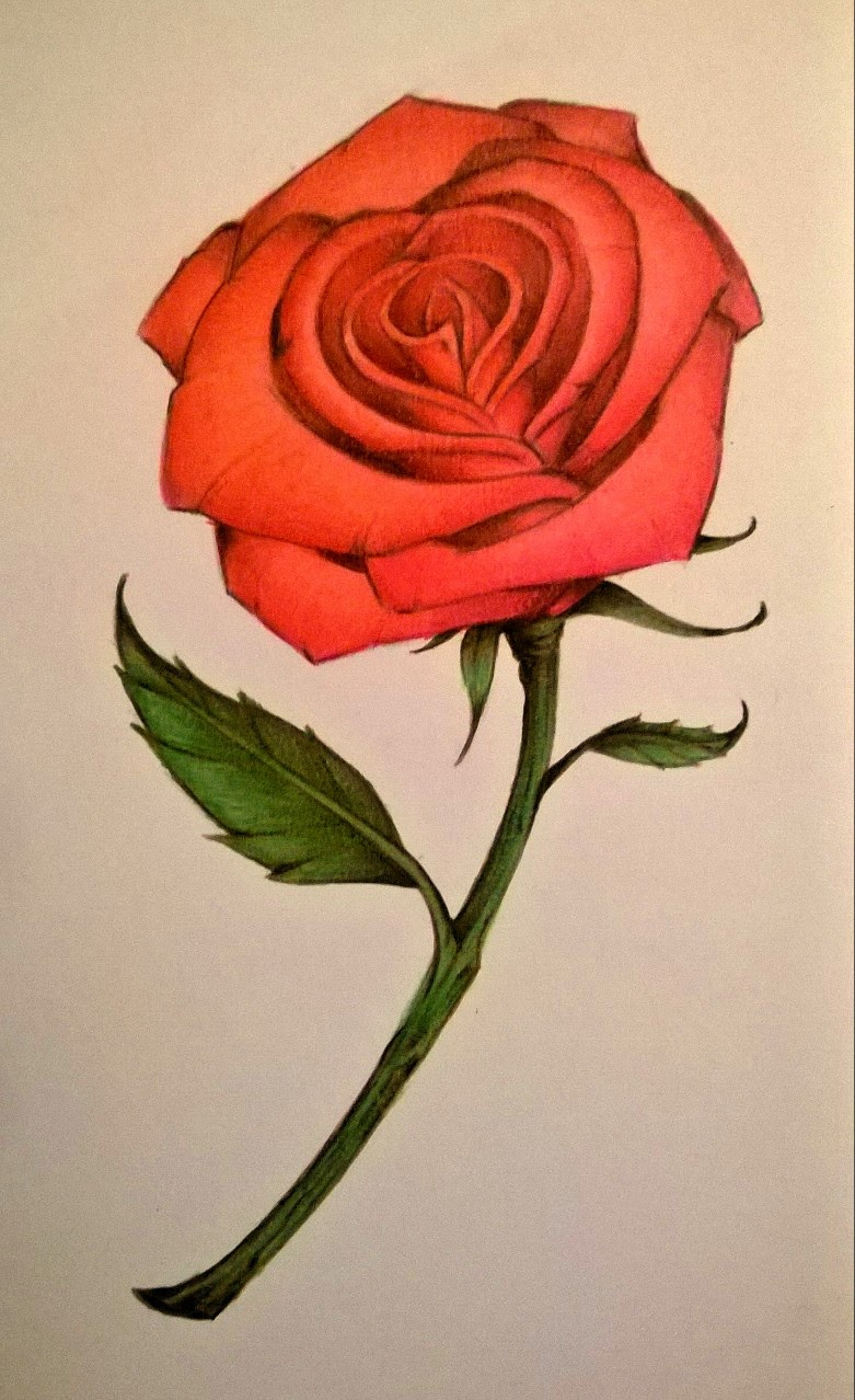 Derrick the Artist: How to Draw a Rose with Colored Pencils