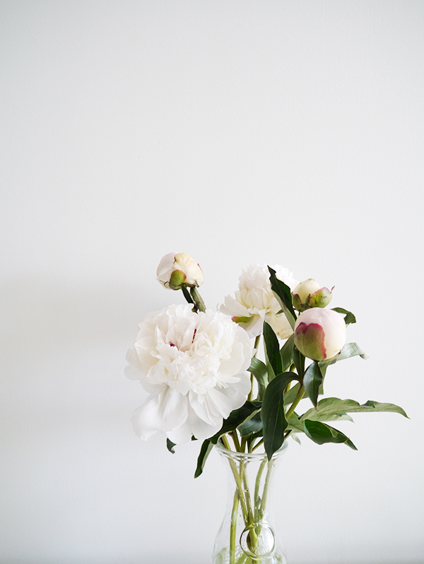 white peonies against a white wall