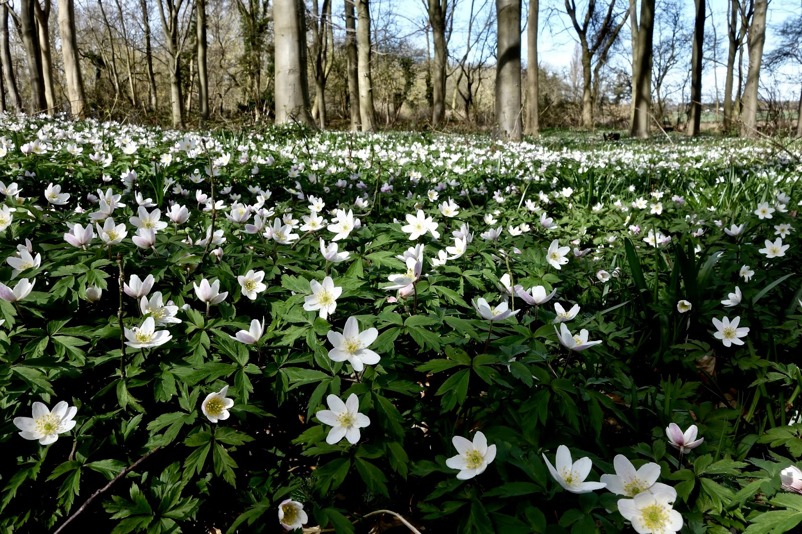Roys Nature Logbook Wild Spring Flowers