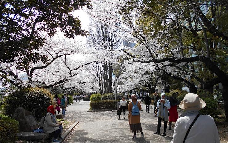 千鳥が淵の桜観賞メーンコースの終わり