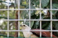Burung Elang - Kebun Binatang Ragunan