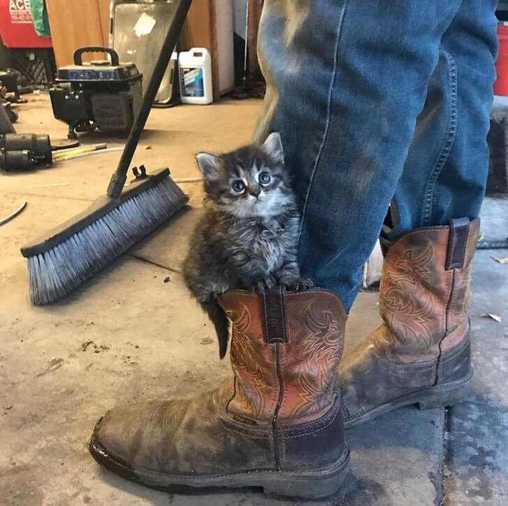 21 Cute Pictures Of Animals That Can Make Even The Worst Day A Bit Better - Got a little assistant helper at work.