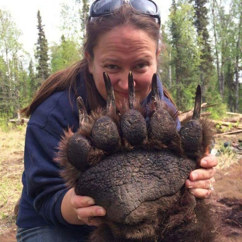 ТОП-10 Фото Животных Огромного Размера