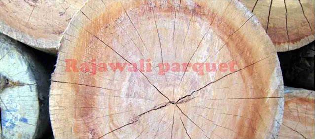 kayu apitong