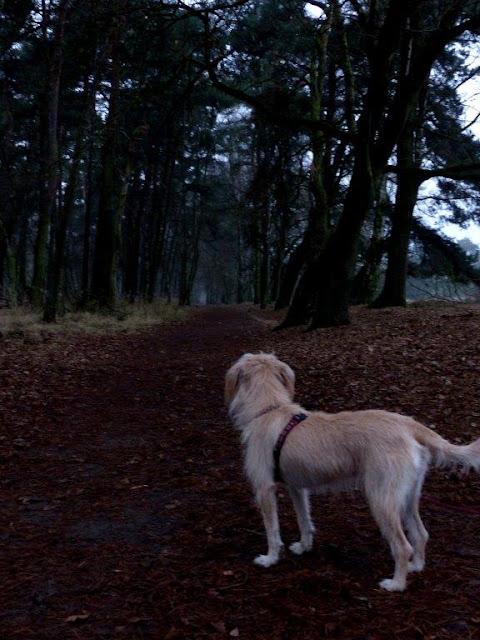 Träume Schäume Traumdeutung Albträume Depression Ängste Hilfe Weg Westruper Heide Hund Winter