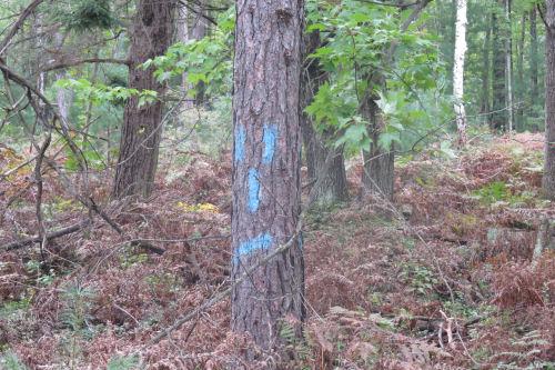 disgruntled tree