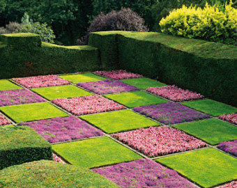 non grass lawn design idea with thyme and cammomile in UK