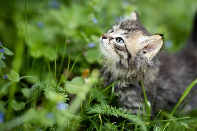 Tips for Training Kittens