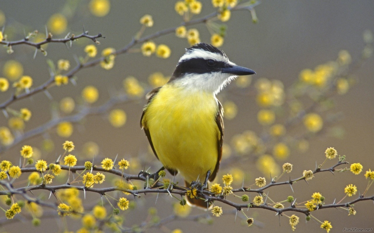 Fun zone latest birds hd wallpapers - Hd pics of nature with birds ...