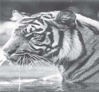 contoh soal pelestarian hewan dan tumbuhan ( ipa kelas 6)
