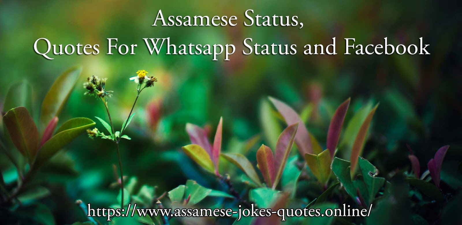 Assamese Jokes - husband wife jokes - Assamese