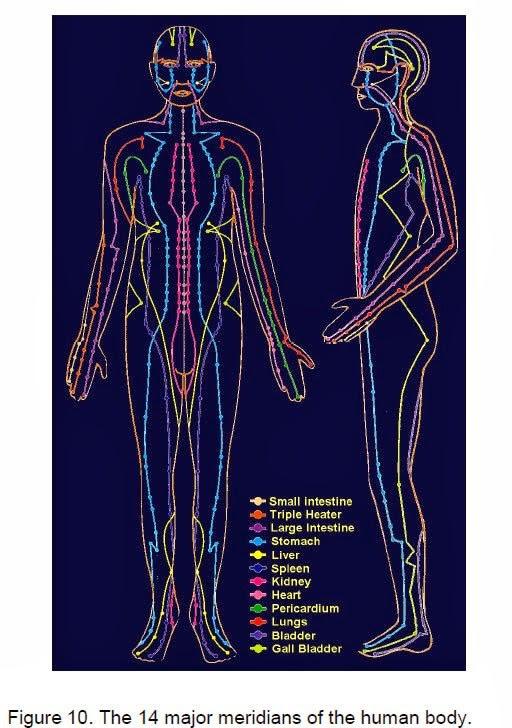 Dos figuras humanas (frente y perfil) indicandorecorrido de los meridianos con lineas de colores y los organos que controlan