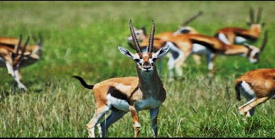 Rollapadu_Wildlife_Sanctuary,wildlife_sanctuary_in_andhra_pradesh.jpg