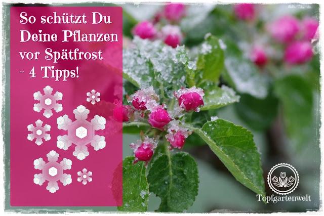 Gartenblog Topfgartenwelt Wetter: 4 Tipps wie Du Deine Pflanzen vor Spätfrost schützt.