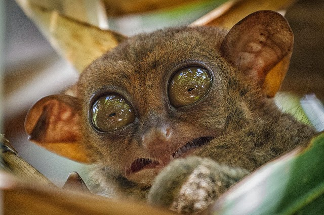 Cute Puppies Photos Wallpapers Cute Funny Animalz Funny Tarsier New Nice Photos And