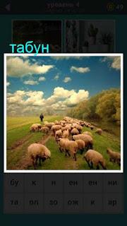 на пастбище идет отара овец с пастухом, похожий на табун 667 слов
