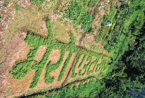 The coriander art patch in Rampuria village, Darjeeling. Picture by Suman Tamang