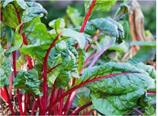الخضراوات الورقية الخضراء يجب أن تأكلها كل يوم