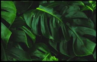 Nutrisi Yang Dibutuhkan Tumbuhan Hijau