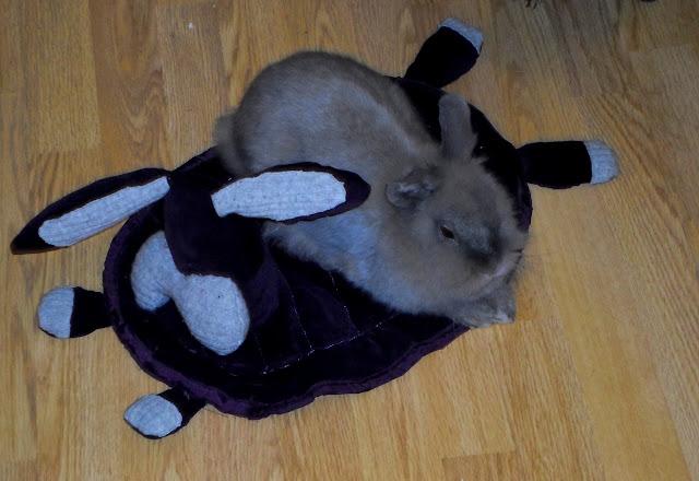 Dywanik dla królika ze spódnicy DIY // Small carpet for bunny DIY