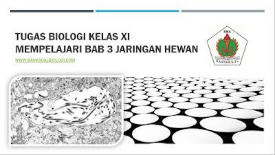 Tugas Biologi Kelas XI Mempelajari Bab 3 Jaringan Hewan