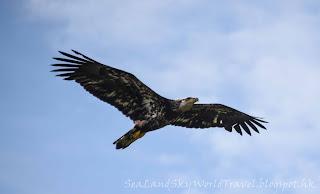 Ketchikan,  克奇坎, 凱奇坎, eagles' viewing area