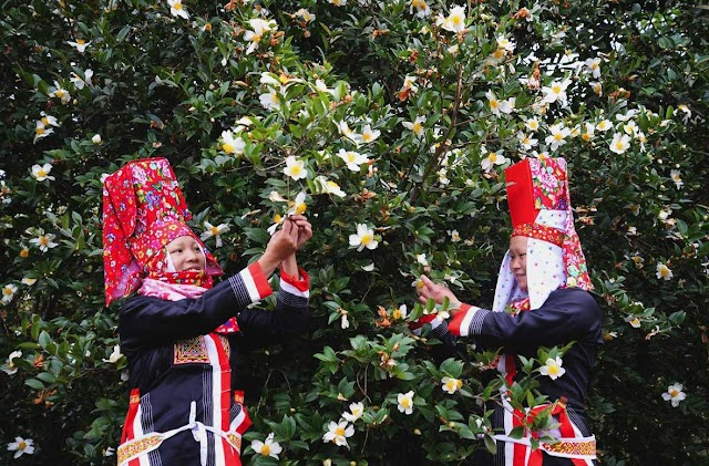 Bình Liêu mùa hoa Sở