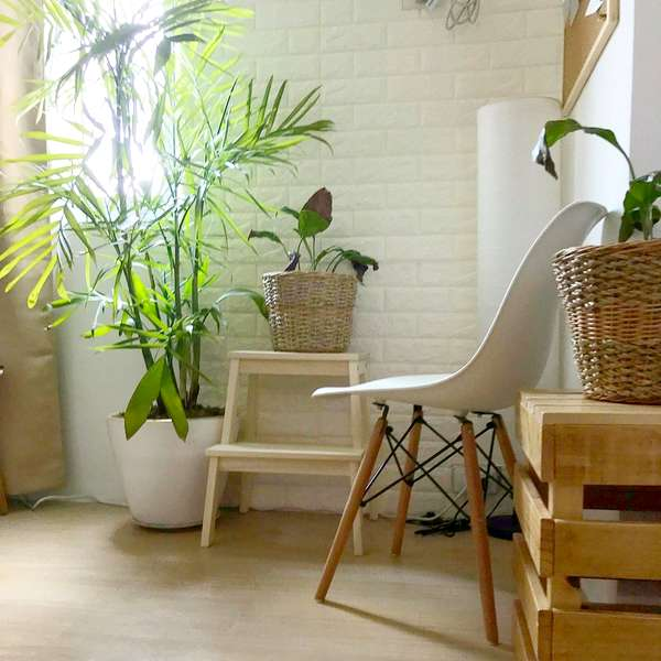 bamboo plant home decor