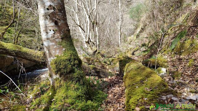 Árboles en el camino junto al río