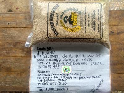 Benih padi yang dibeli AI KURNIA Bandung, Jabar. (Sebelum packing karung ).