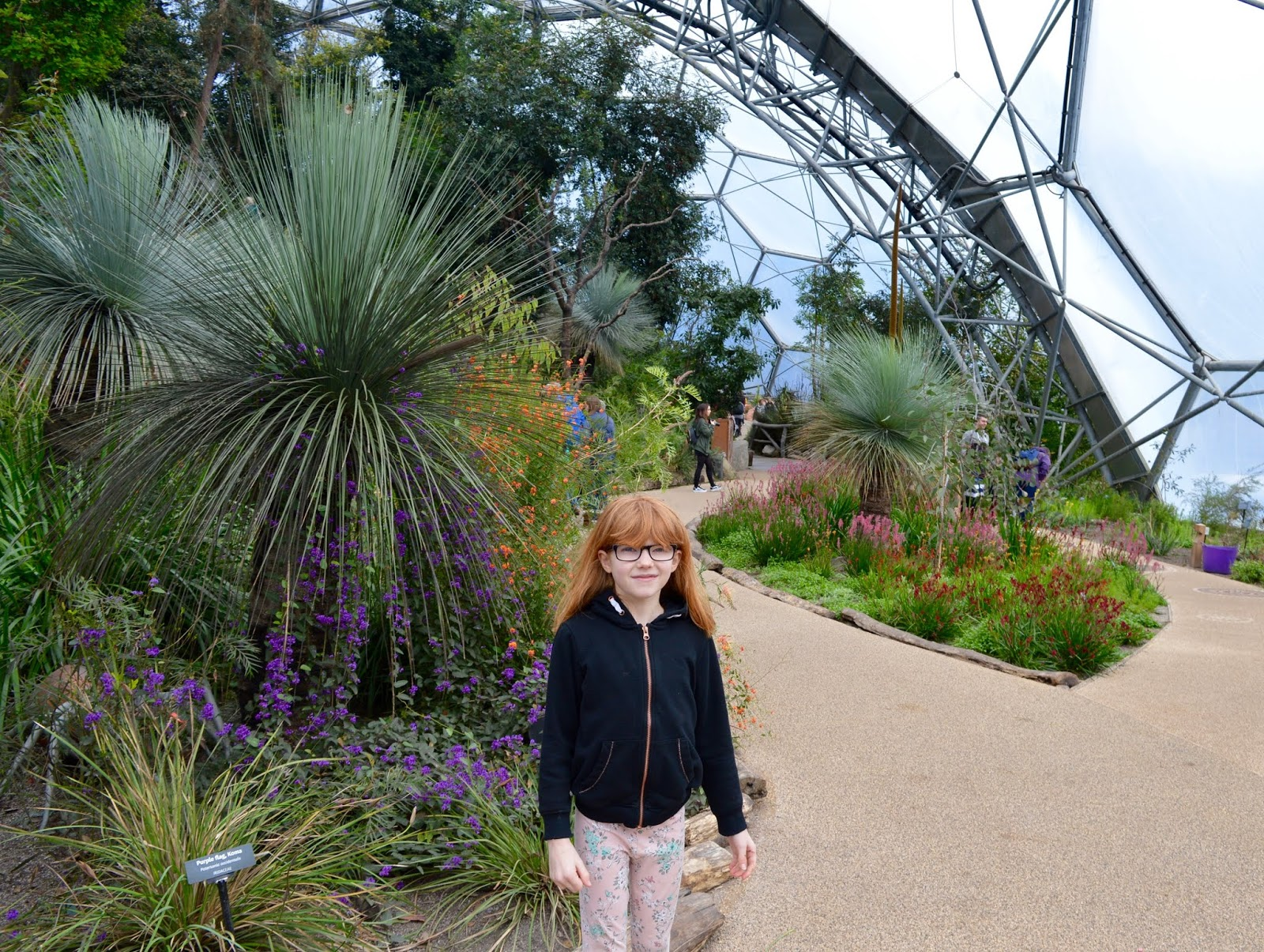 Planning a Trip to Cornwall - Ideas & Top Tips - the Eden Project