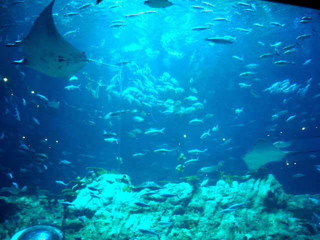 Fish and rays in the main tank of the Grand Aquarium, Ocean Park, Hong Kong