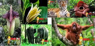 Makalah Flora Dan Fauna Makalah
