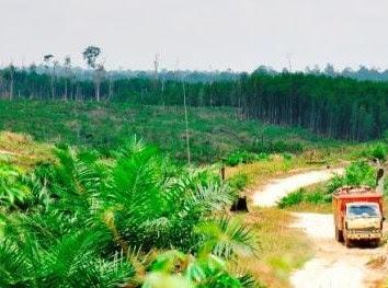 hutan lindung bukit betabuh desa cengar